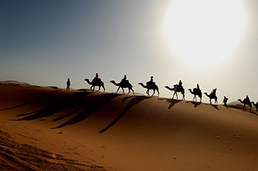 camel-trip363