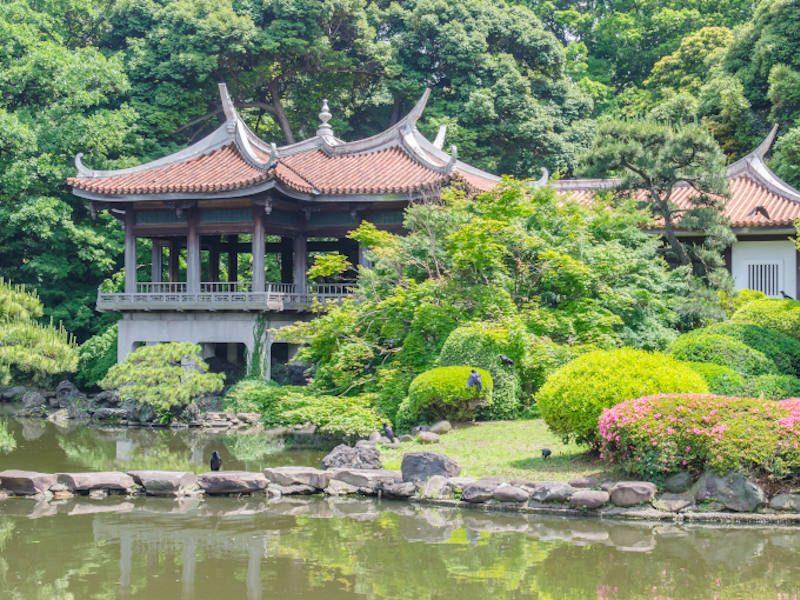 Japan dmc Shinjuku gyoen national garden